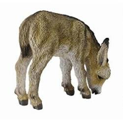 Donkey foal grazing. COLLECTA 88408